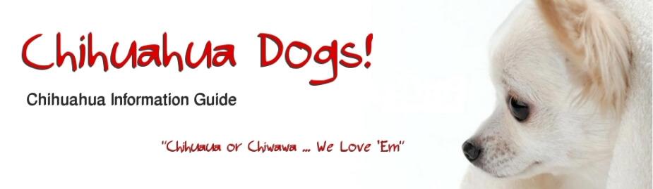 Chiwawa Dogs